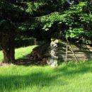 Kdo ve, koliko nazaj ... Krepka drevesa že rastejo v 'notranjosti' ...