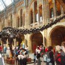 Okostje dinozavra