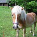 ena slikca konja
