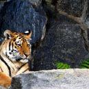 Tierpark Berlin,oktober 2006