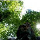 Sonce Prešernovega gaja