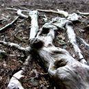 Tekoče korenine