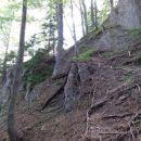 pod vrhom je gozd macesnov, ki težko kljubujejo težkim razmeram
