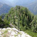 macesnov gozd