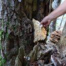 neznana lesna goba