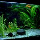 Gojilni akvariji