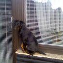 Bobi počiva  na okenski polici.