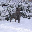 26.11.-sneženo jutro :))))))))