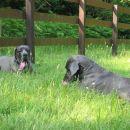 26.06.05 bonni in byblos - hlajenje v travi :)