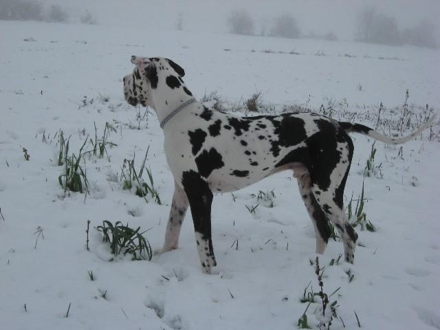 Costa na snegu 25.11.08 - foto