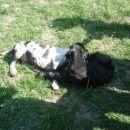 Doga piknik 2007