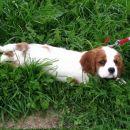 Pocitek v travi