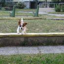 Jaz sem prava za agility.. :-)
