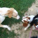 Srecanje z nekim psom