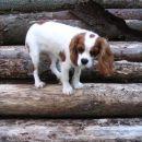 Na skladovnici drv