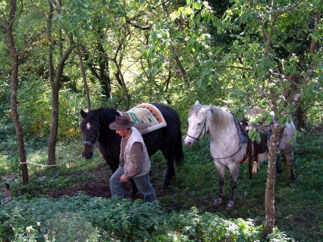 Kostanjev piknik - foto