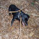 ... nasao sam najvecu granu u sumi, i naravno trcao s njom ko lud do prva dva drva, onda j