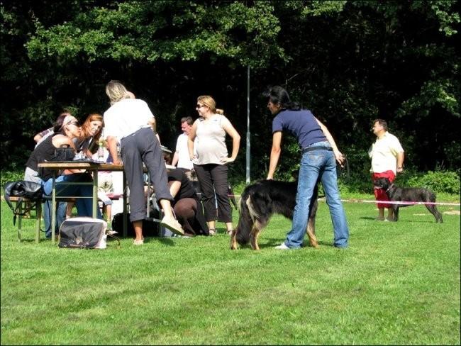 Vzrejni pregled - Domžale 2008 - foto povečava