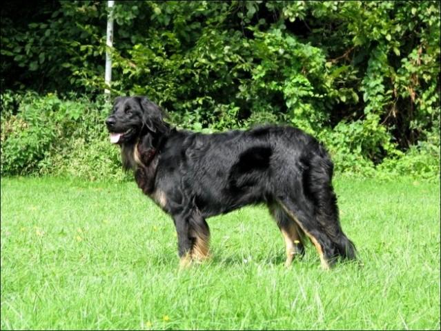 Vzrejni pregled - Domžale 2008 - foto