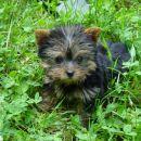 Puppa u travi