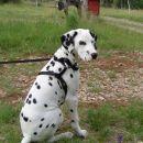 Pravkar sem videl konja !!! Je to kakšna velika pasma psa ???...