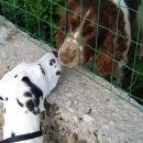 Poljubček mojemu prijatelju Roliju....