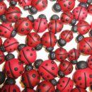 38 Pikapolonice ''Ladybugs''