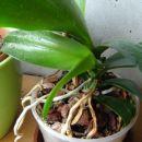Nova rastlinica