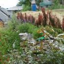 moji vrtovi