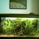 Akvarij 240 L, nekaj čez 30 ribic