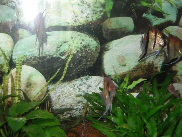 Ribe po zdravljenju - foto