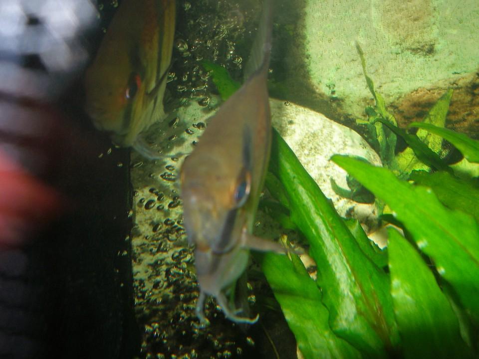 Ribe po zdravljenju - foto povečava