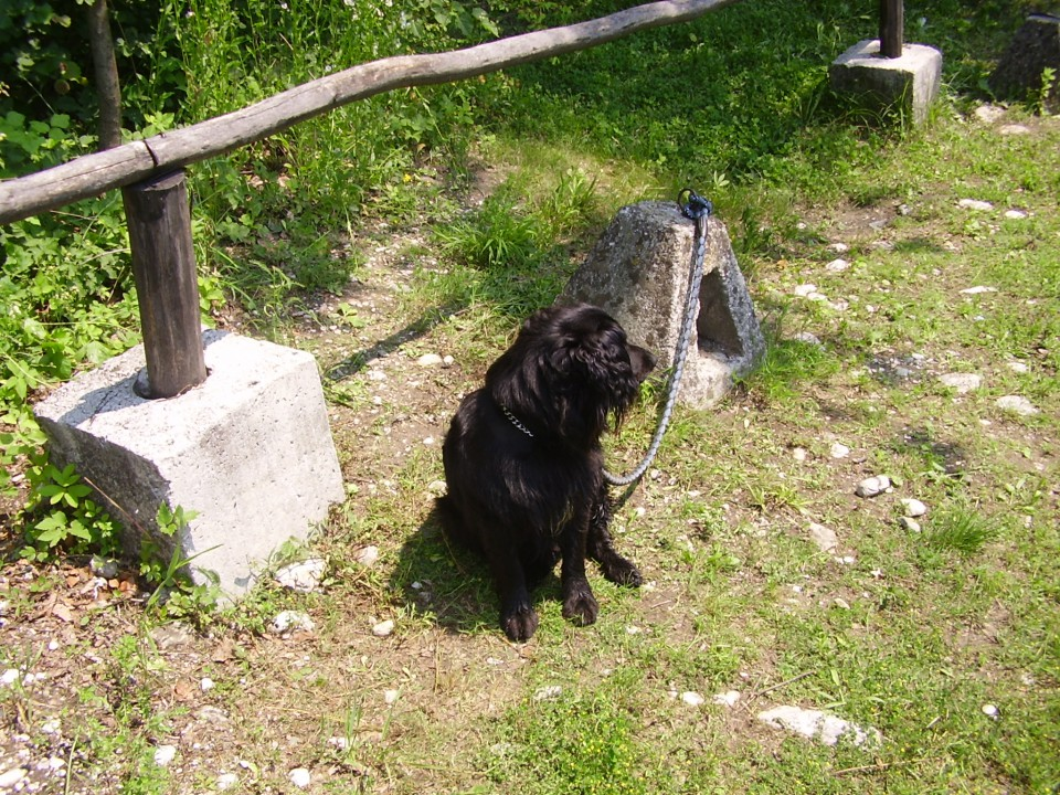 Pasja šola z Ronom - foto povečava